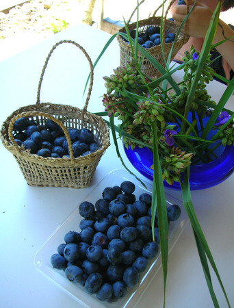blueberry picking-4.jpg