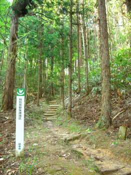 entrance to the forest.jpg