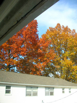 turning leaves from the window.jpg